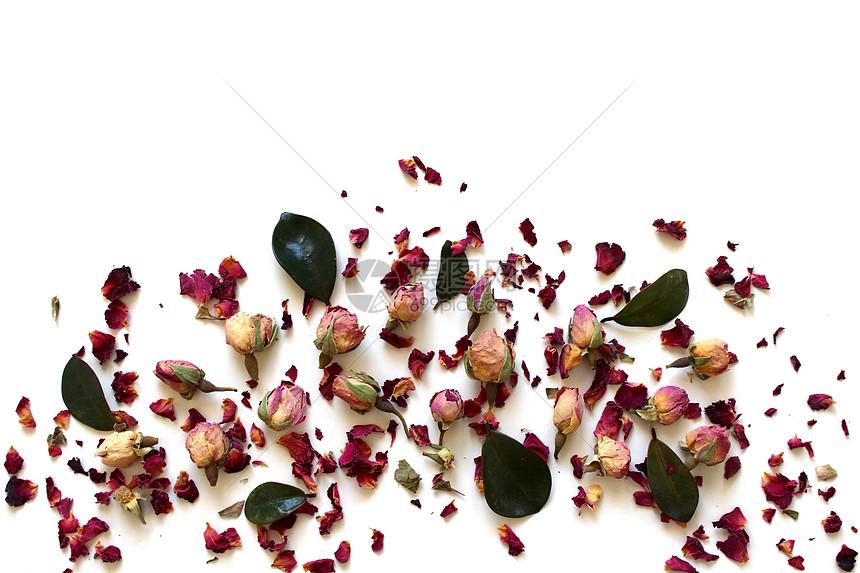 玫瑰花瓣背景图片
