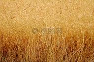秋天的草木图片