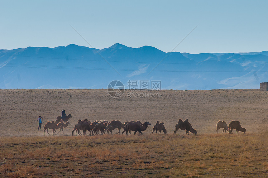 新疆天山牧业草场图片