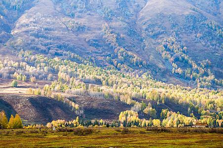 新疆禾木山野风光图片