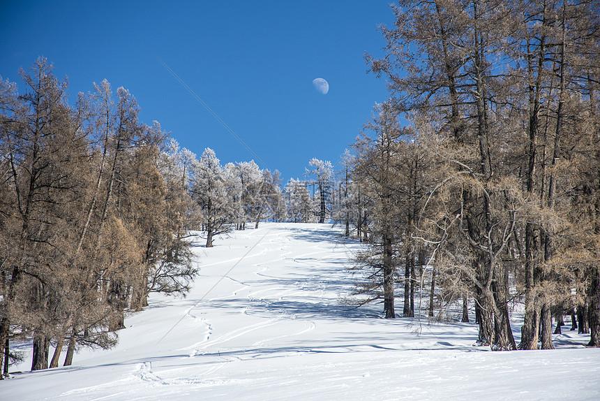 新疆冬季喀纳斯大美雪景图片