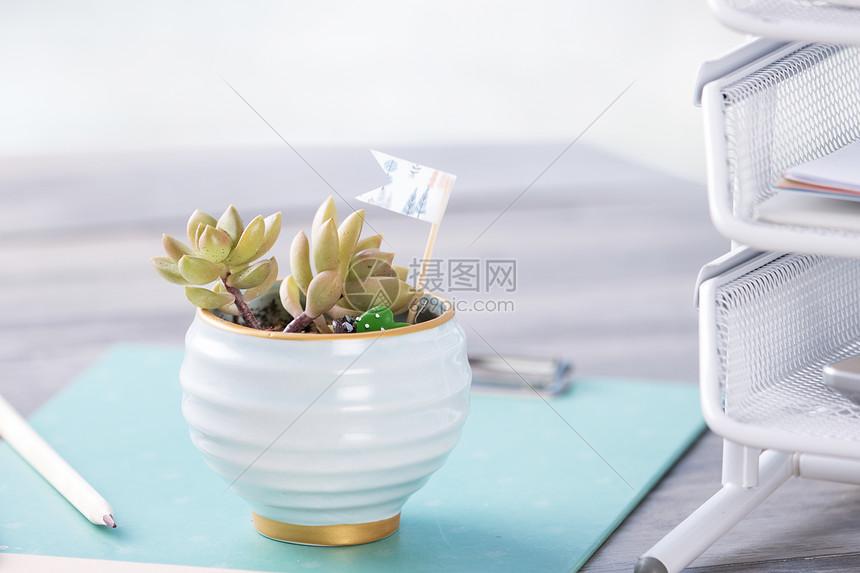 绿色植物静物拍摄图片
