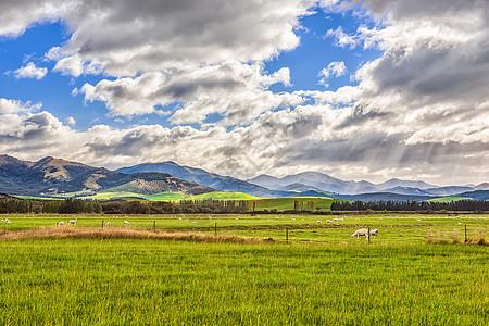 蓝天白云下的新西兰牧场风光图片