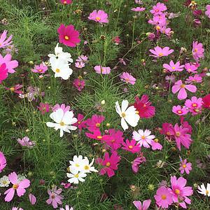 美丽的花朵图片
