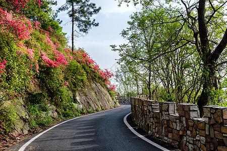 开满杜鹃花的郊外小道图片