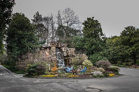 上海植物园假山小景图片