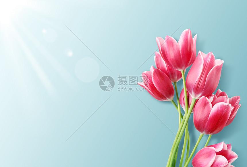 母亲节花卉背景图片