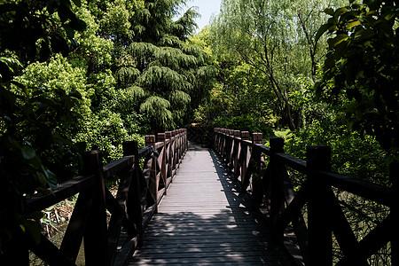 茂密树丛里的桥图片