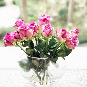 紫红色玫瑰图片