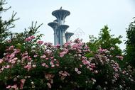 奥林匹克森林公园图片