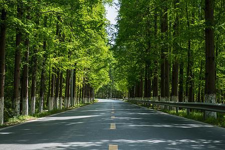 夏天树林间的公路图片