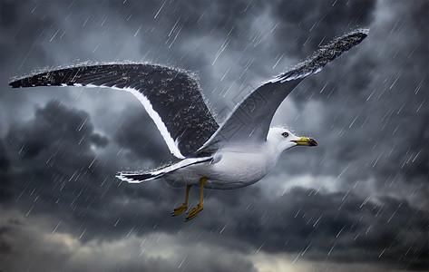 雨中的海燕图片