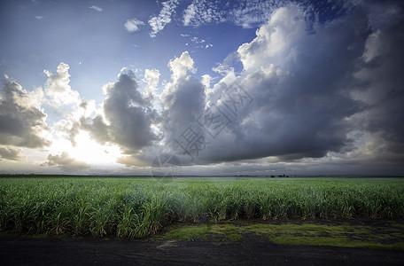 蓝天下的田园图片