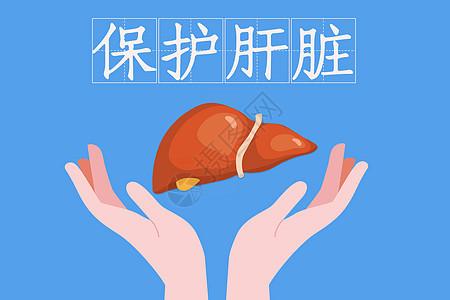保护肝脏图片
