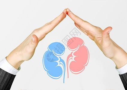 保护肾脏图片
