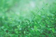绿色小草生机勃勃图片
