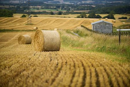 英国乡村小麦地图片