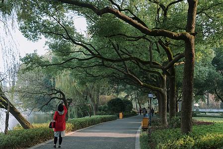 公园郁郁葱葱的步道图片