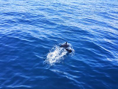 菲律宾出海观海豚图片
