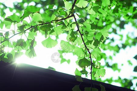 夏日屋顶上的绿叶图片