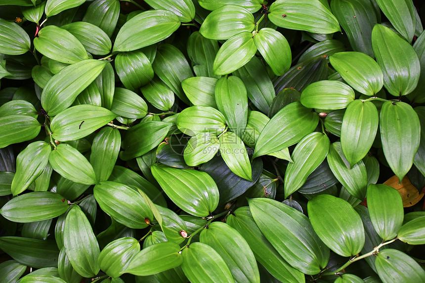 好看的绿色植物背景图片