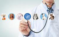 宠物医疗图片