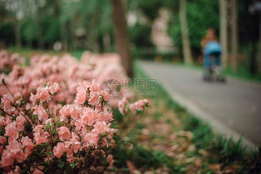 路边漂亮的花丛图片