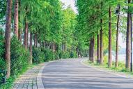 武汉东湖骑行绿道图片