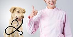 宠物医生500916352图片