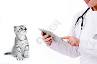 宠物医生图片
