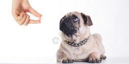 宠物医疗场景图片