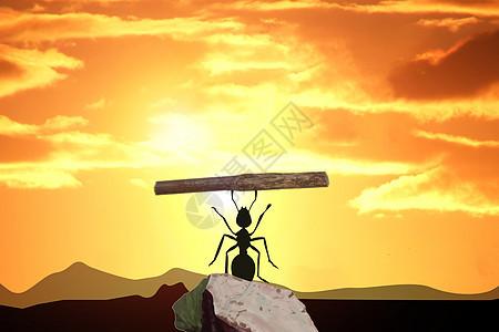 夕阳下的蚂蚁图片