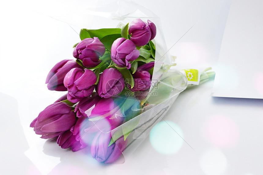 郁金香花束图片