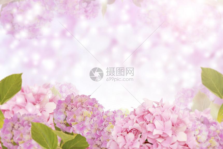 丁香花背景图片