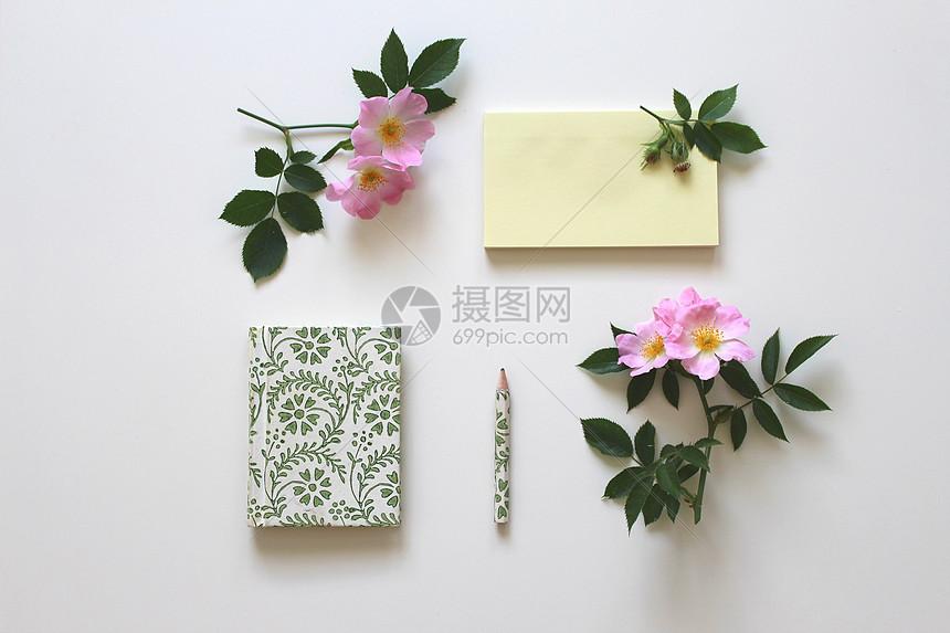 白纸上的玫瑰花图片