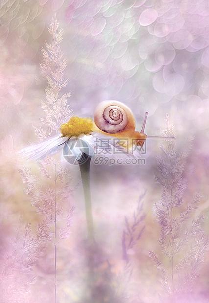 唯美的花香背景图片