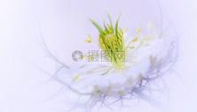 唯美的花香背景500920445图片