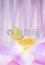 唯美的花香背景500920448图片