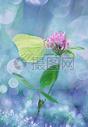唯美的花香背景500920453图片