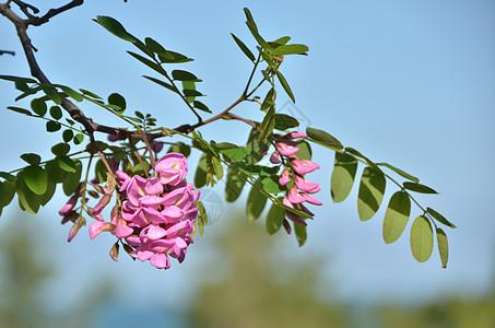 青岛海边公园内一簇美丽的花图片