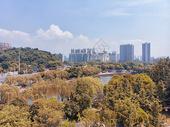 俯瞰城市公园的树木图片