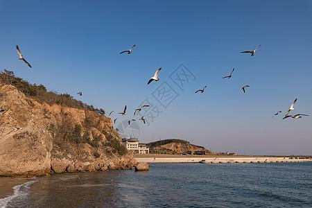 海鸥沙滩图片