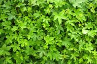 绿色植物背景素材图片