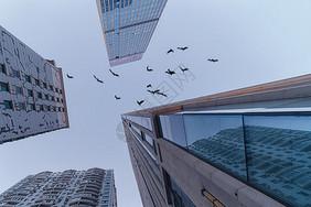 城市高楼大厦中飞过的一群鸽子图片