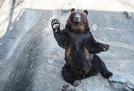 北海道登别黑熊图片