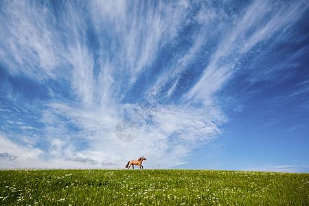 草原奔马图片