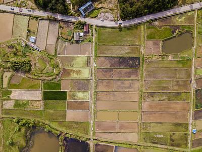航拍荷塘农田藕田种植图片