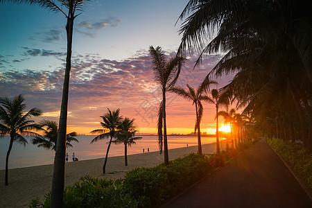 海南椰影成林美丽风景图片