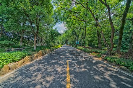城市公园里林荫小道图片