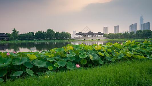 武汉沙湖公园风光图片